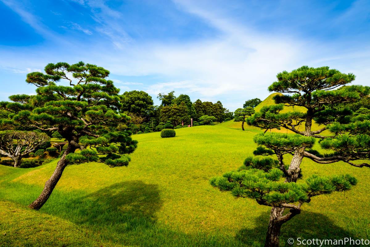 The Tree Garden