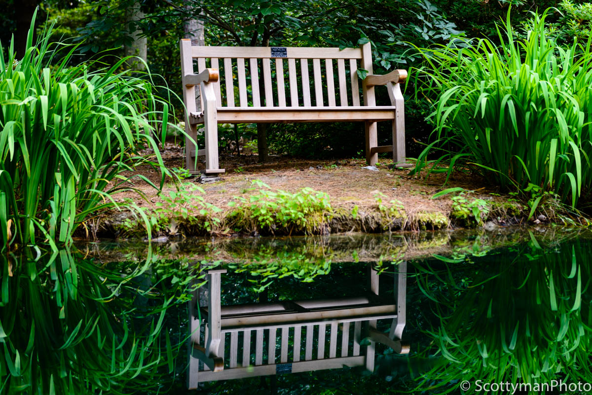 (Handheld photograph with low camera shake) A beautiful isolated bench captured at the Botanical Gardens in Norfolk Virginia.