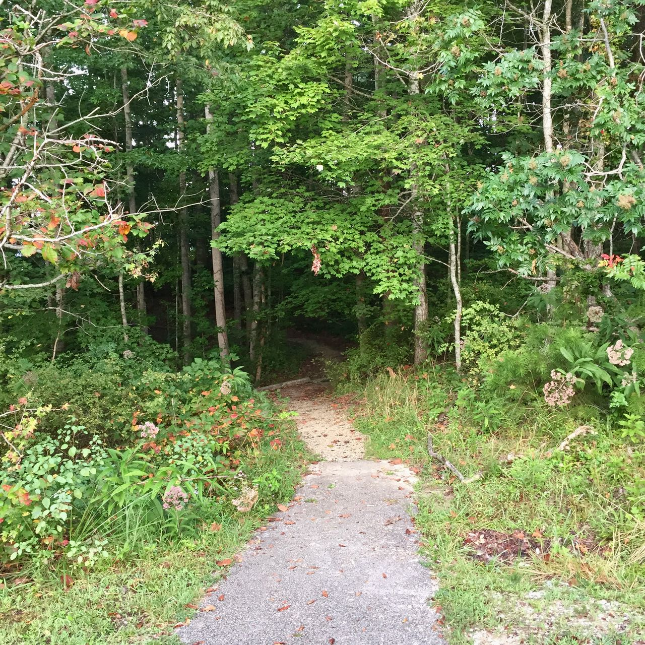 An image of the trail from the parking area that leads to Windy Bay Fishing Point at Cave Run Lake in Morehead, Kentucky.